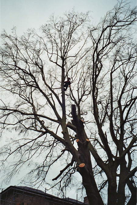 Tree Surgery Colchester
